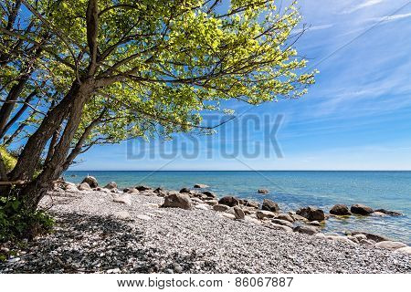 Trees On Shore Of The Baltic Sea