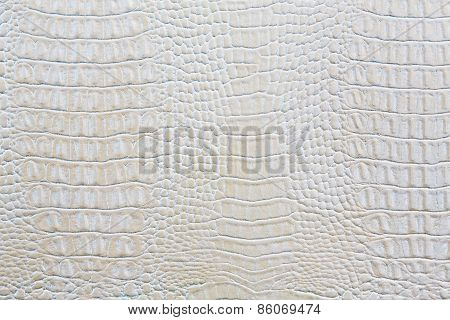 Crocodile Skin White Leather Background