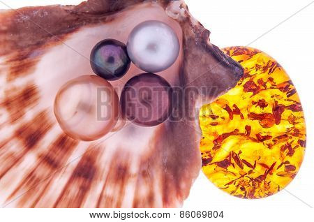 Beautiful Pearl In The Shell With Amber