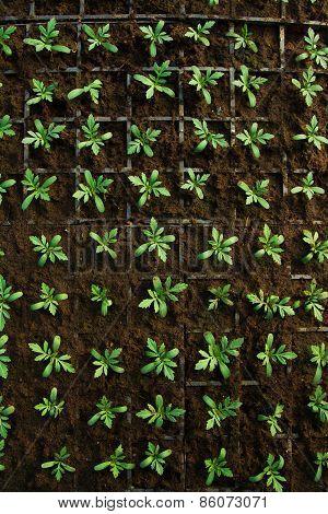 Plants Growing Inside Of Pots Inside Of A Greenhouse