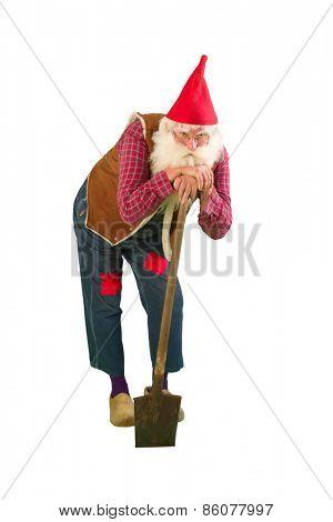 Senior garden gnome with beard and shovel