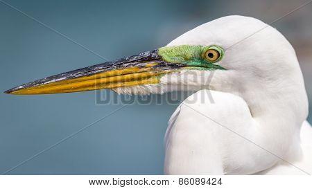 Egret at Florida Beach