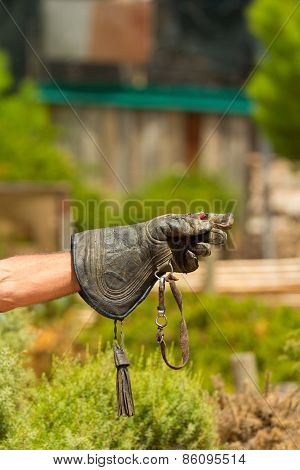 Falconers Hand