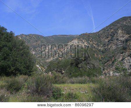 Pacoima Canyon Vegetation