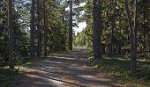 image of dirt-bike  - Nordic trail - JPG
