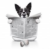 stock photo of white terrier  - terrier dog reading newspaper sitting on the ground or floor isolated on white background - JPG