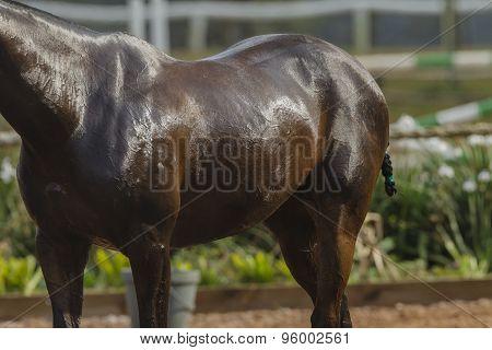 Horse Body Wash