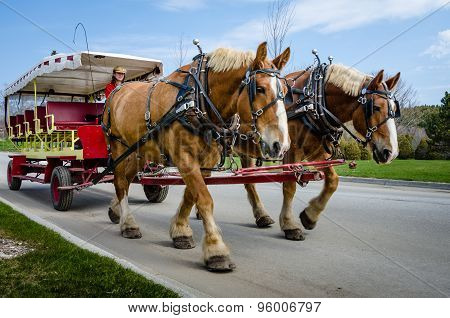 Female driver leads horses along road on Mackinac Island