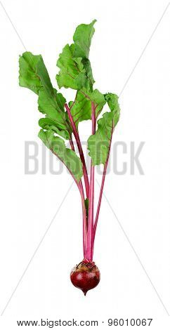 Young beet isolated on white