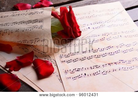 Beautiful rose wrapped on music sheets, closeup