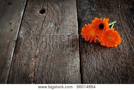 bouquet of calendula (Calendula officinalis L.) on vintage wooden board