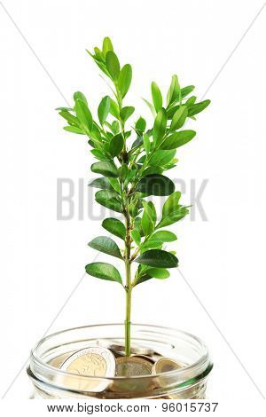 Money with growing sprout in glass jar isolated on white