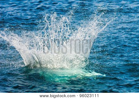 Jump With A Splash In The Sea