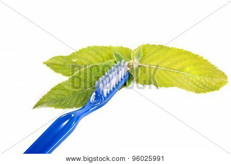 Toothbrush And Leaves Of Mint