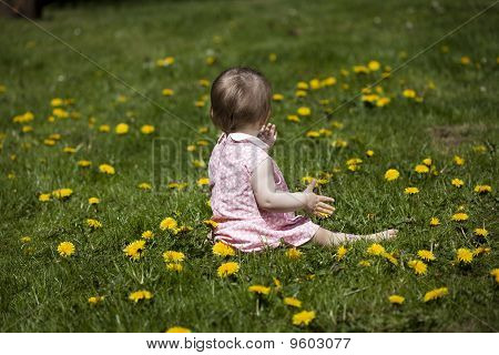 Baby Girl In Field Of Dandelions
