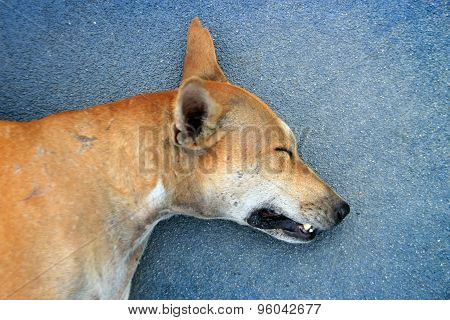 Head Of Stray Dog Sleep On Ground