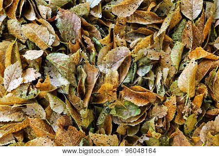 Rotting Leaves