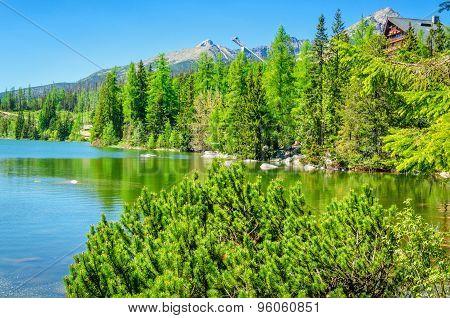 Beautiful mountain lake with dwarf pine