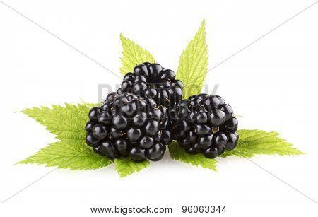 fresh blackberies isolated on white background