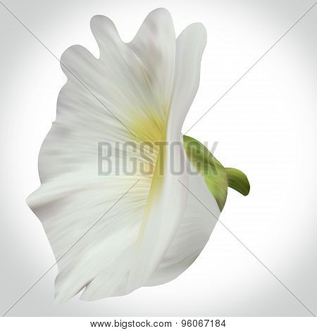 White Mallow illustration close-up on backdrop for design