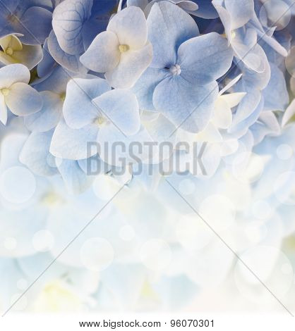 Hydrangea Floral Background