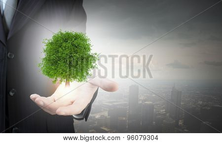Close up of businessman hand holding green tree in palm