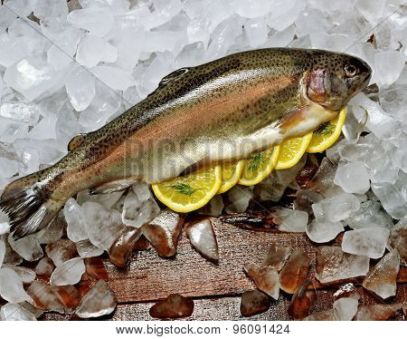 Close up of a Rainbow Trout on a wood table covered with a bed of ice.