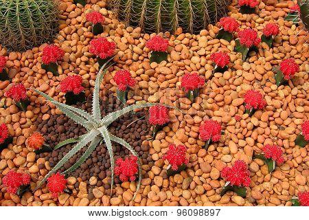 Beautiful Cactus plants in garden