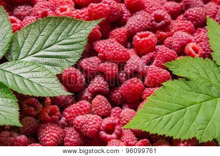 raspberry background with green leafs