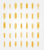 Постер, плакат: Vector wheat ears icons set