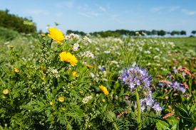 image of biodiversity  - Closeup of a multicolored border with wild flowers and plants next to a field - JPG