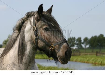 Rural Scenery With Horse