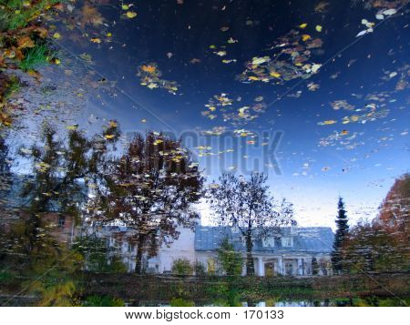 Reflection Of Sky In Pond In Botanic Garden,