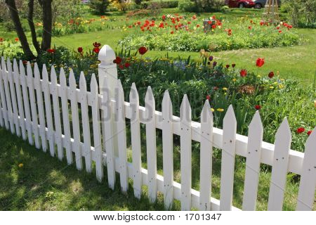 Tulip Picket Fence