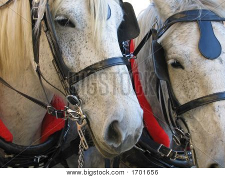 Two Horse Power
