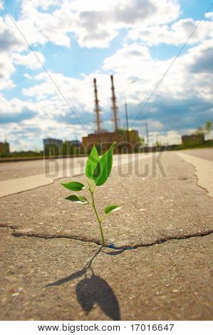 Young plant makes the way through asphalt on city road.