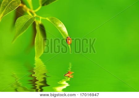 The small bug on a leaf of a plant. Reflected in water.
