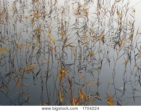 Reservoir With A Sedge.