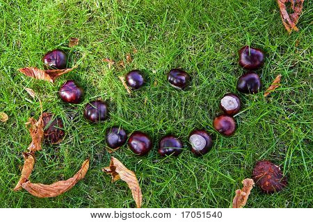 smiley face made of wild chestnuts on grass bed