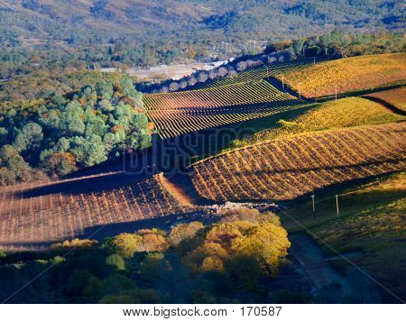 Vineyards, Autumn