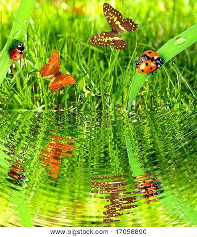 Butterflies and ladybugs with water reflection