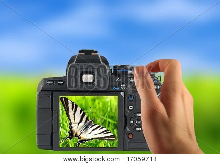 Dslr photographing of beautiful butterfly