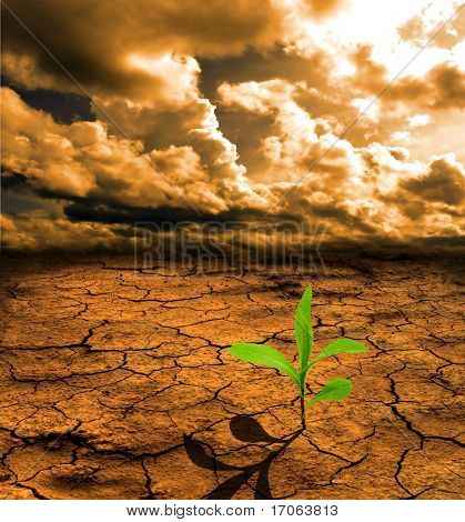 Tierra muerta