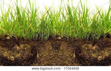 grünen Gras mit Erde crosscut