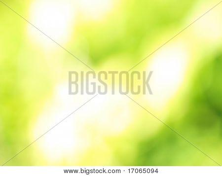 Resumen luz brillante sobre un fondo verde