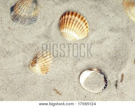 Sea shells on sand background