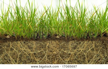 Green grass on a dirt isolated