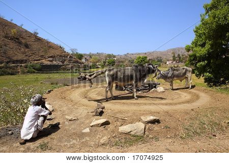 old indian man farmer smoking pipe in countryside near ranakpur in rajasthan state in india