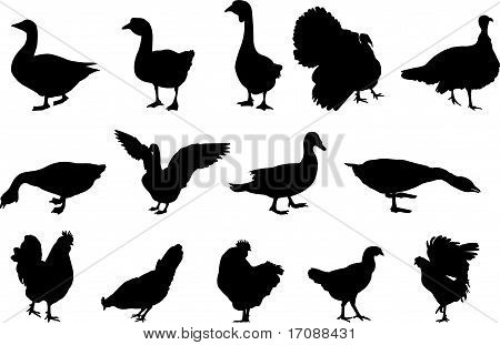 poultry silhouettes
