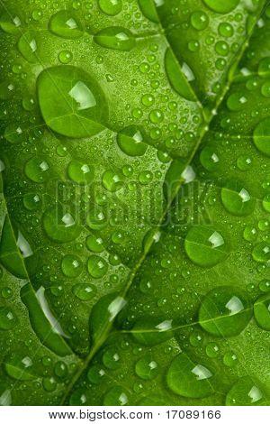 folha verde fresca com gotas de água